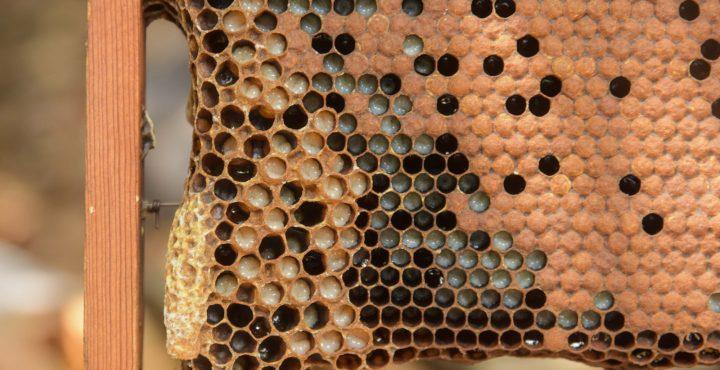 直擊「嗡嗡嗡」大本營 一探好蜜生產歷程
